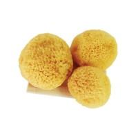 Sea Spong Tampons